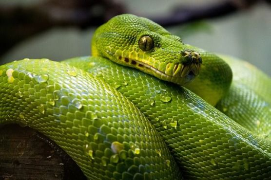 deadliest animal on earth snake