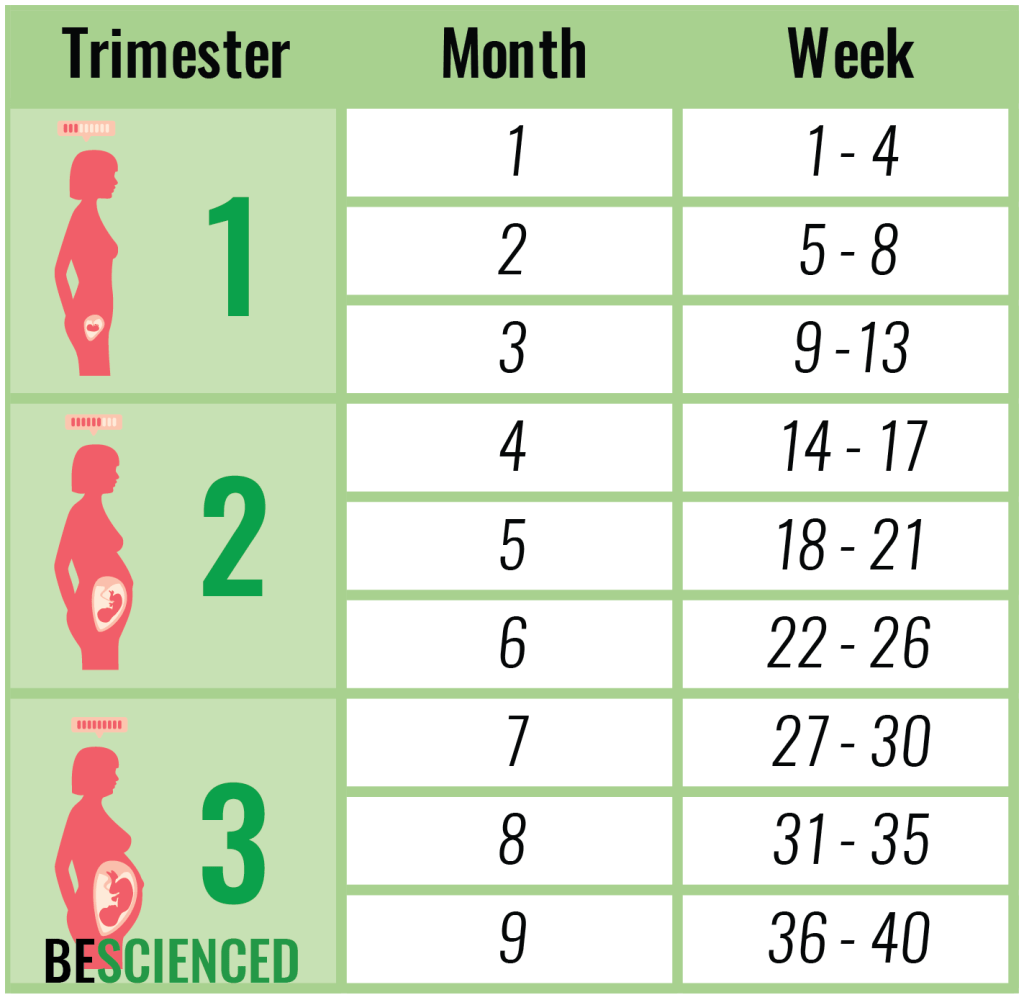 Weeks To Months Pregnancy Chart - 22 23 weeks 5 months or 6 may 2018