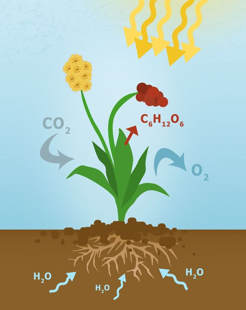 oxygen origin where comes from photosynthesis