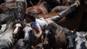 """Aloitadores"" jumps over a wild horse during the ""Rapa Das Bestas"" (Shearing of the Beasts) traditional event in the Spanish northwestern village of Sabucedo, some 40 kilometers from Santiago de Compostela, northwestern Spain, on July 3, 2016, during the 400-year-old horse festival called ""Rapa das bestas"" (Shearing of the Beasts).  Hundreds of wild horses are rounded up from the mountains to be trimmed and marked. / AFP / MIGUEL RIOPA        (Photo credit should read MIGUEL RIOPA/AFP/Getty Images)"