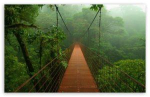 forest_bridge_2-t2
