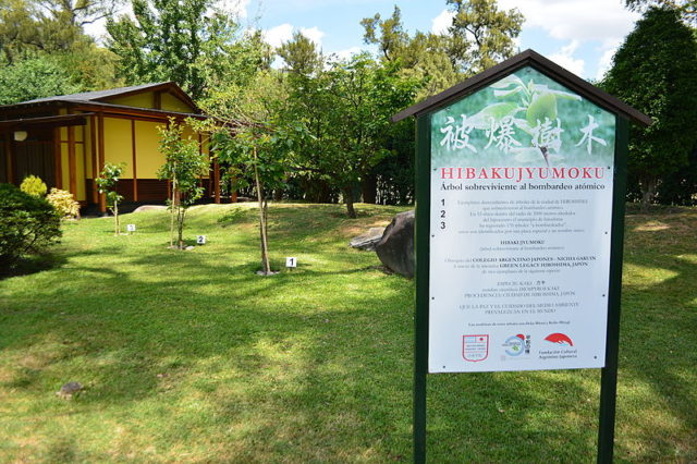 ماهي الاشجار التي نجت من كارثة هيروشيما ؟