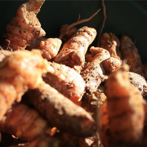 curcuma - alimentation vivante - damien artero