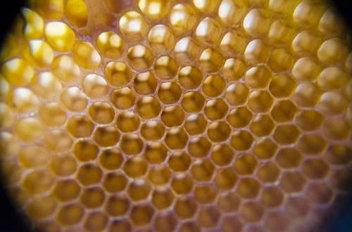 miel - alimentation vivante - damien artero