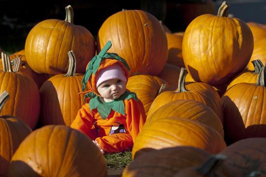 Pumpkin_patch_gi_285341gm-e
