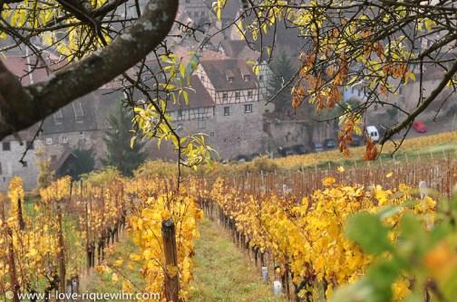 Riquewihr seen from the Schoenenbourg vineyard