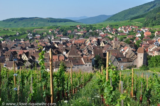 Riquewihr seen from the famous Schoenenbourg vineyard