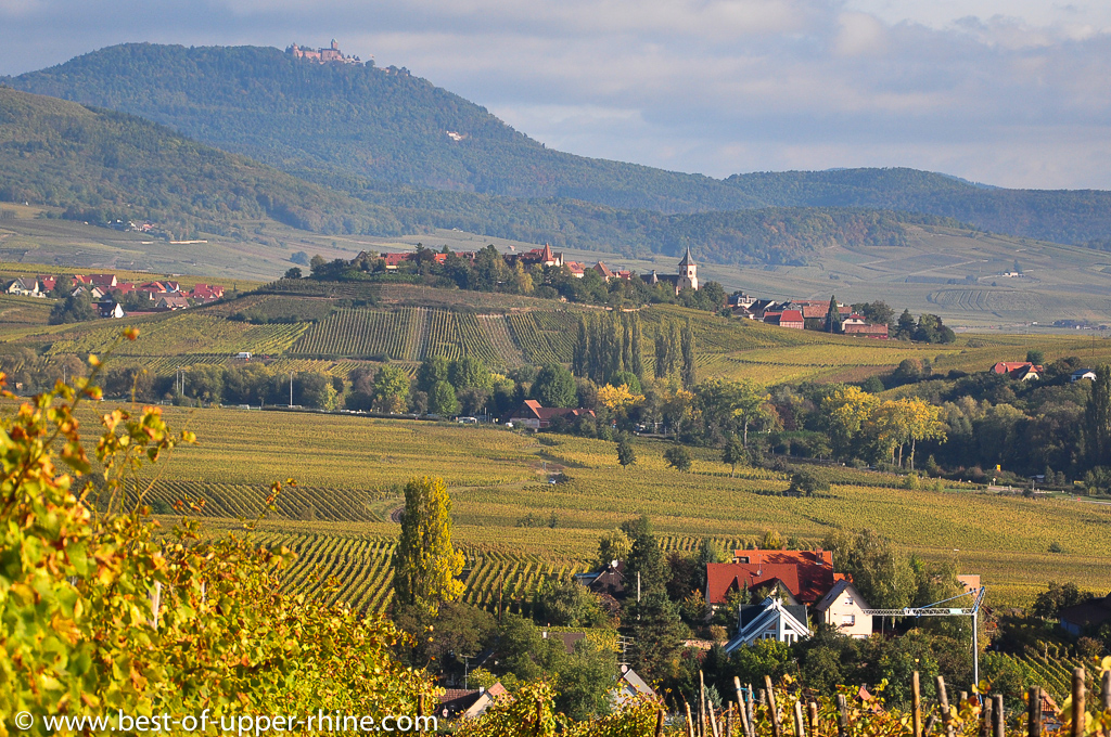 Vineyards on the hills near Riquewihr and Zellenberg, Alsace
