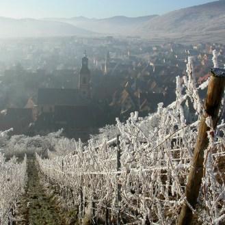 Schoenenbourg vineyard of Riquewihr in Winter