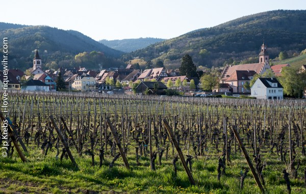 Riquewihr nestles in its valley at the foot of the Vosges.
