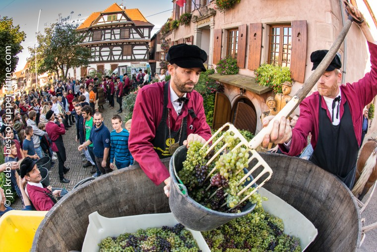 Unloading the grapes: a human chain passes the buckets to the press ...