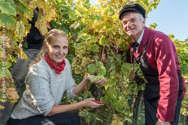The Great Venerable in good company : a grape harvester from Finland