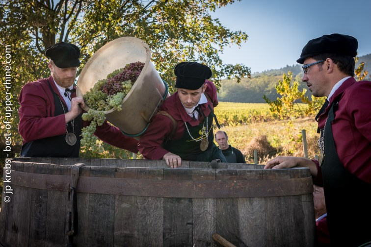 Loading of the grapes by the members of the Confrérie