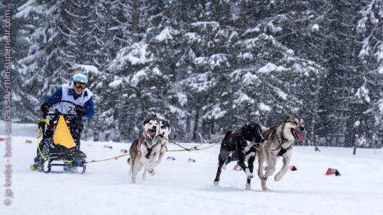 Sled dog race at Lac Blanc Alsace Vosges