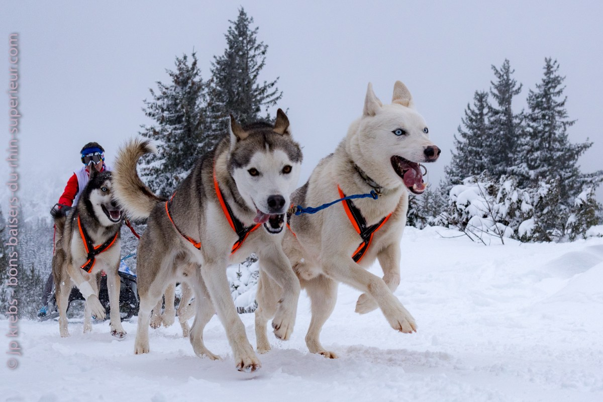 Sled dog race at Lac Blanc