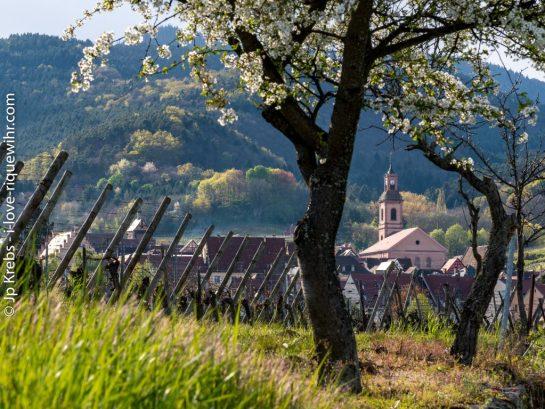 Spring in Riquewihr, Alsace
