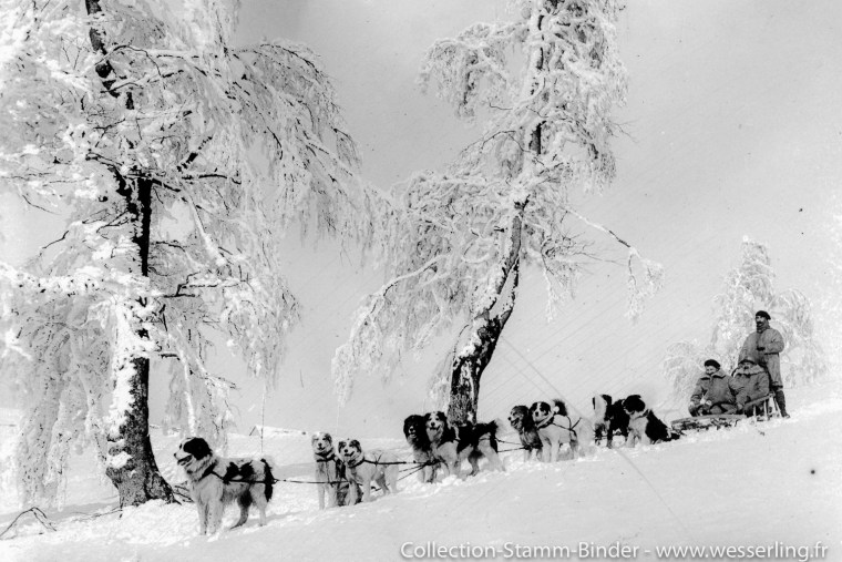 Alaska sled dogs in the Vosges mountains during WW1