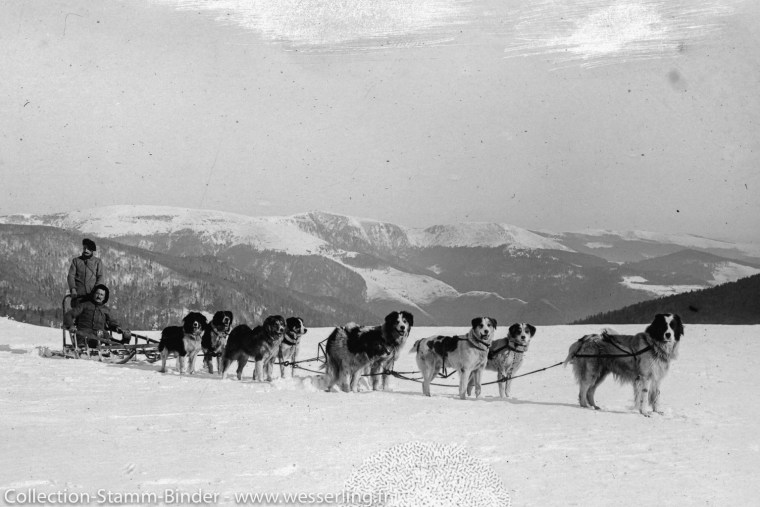 Alaska sled dogs in the Vosges during WW1Alaska