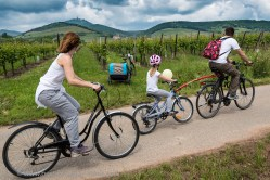 Slow Up Alsace. As a family, on the Vineyard Cycle Route.