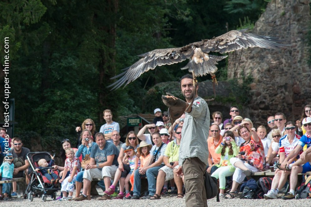 Falconer with his bird of prey at the Eagles' Park