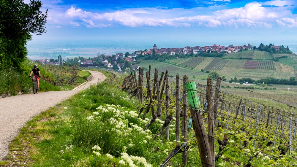 Alsatian wine route with a bike