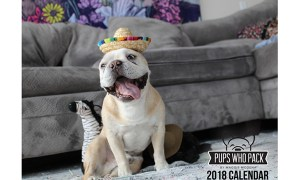 1514105217 151 8 dog calendars to ring in 2018 - 8 Dog Calendars to Ring In 2018
