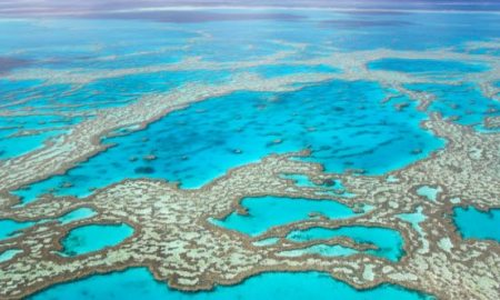 1514301593 top 10 fresh facts about the great barrier reef - Top 10 Fresh Facts About The Great Barrier Reef