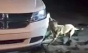 800x420 1513605297 - Woman Livestreams Dog Tearing Her Bumper Off Her Car And Shamelessly Asks Police To Shoot The Animal