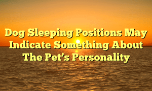 Dog Sleeping Positions May Indicate Something About The Pet's Personality