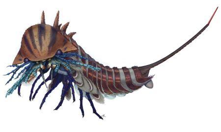 1514938582 this tiny sea monster had creepy mouth appendages - This tiny sea monster had creepy mouth appendages