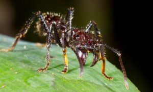 1515680227 10 most terrifying insects in the world - 10 Most Terrifying Insects In The World