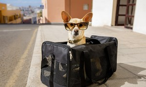 1516860959 you might want to try pet relocation services for your next move - You Might Want to Try Pet Relocation Services for Your Next Move