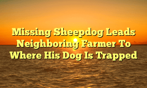 Missing Sheepdog Leads Neighboring Farmer To Where His Dog Is Trapped