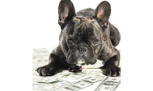 how much would dog parents spend to save their pups life - How Much Would Dog Parents Spend to Save Their Pup's Life?