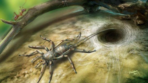 100 million year old spider