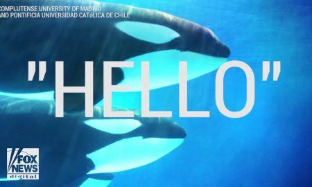 video killer whales can talk as scientists teach orcas to mimic human speech - VIDEO: Killer whales can 'talk' as scientists teach orcas to mimic human speech