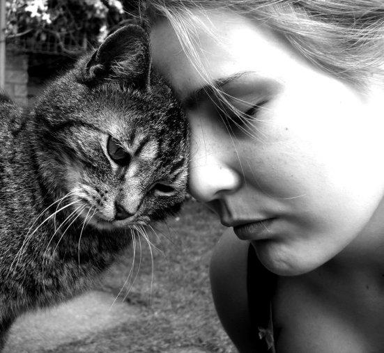 10 formas en que los gatos demuestran su cariño