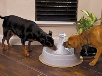 top 10 best dog water fountain for mens best friends!