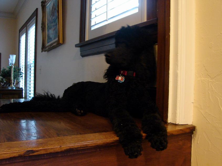 Max On Kitchen Patrol