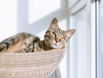 The Best Cat Trees for Large Cats: For Play, Rest, and Sleep