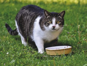 The 5 Best Cat Foods for Urinary Tract Health to Buy in 2021