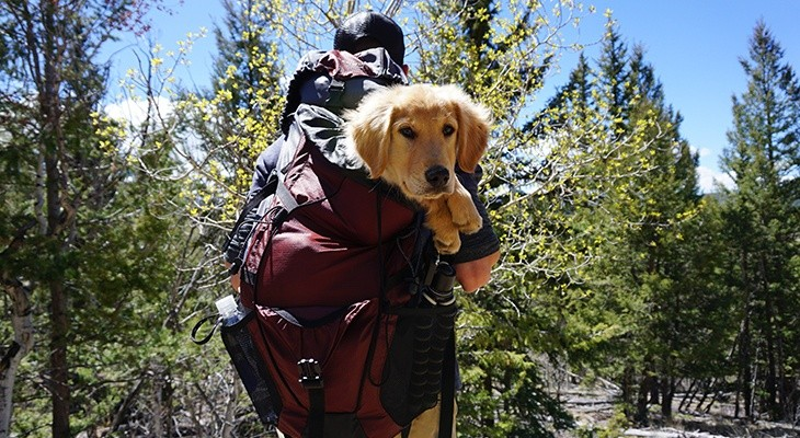 Best Dog Carrier Backpacks Reviewed Rated Amp Compared