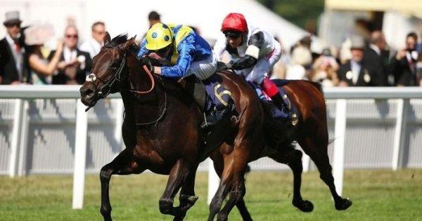 Cesarewitch betting websites bovada betting app