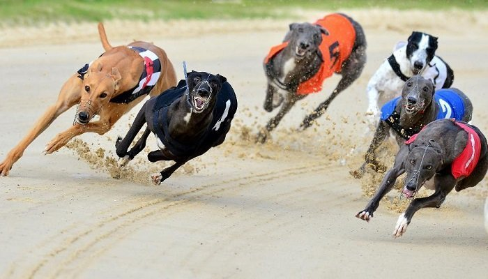 Best Greyhound Bets of the Day 1