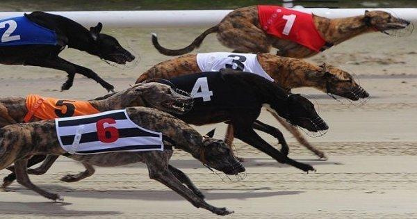 Greyhound racing betting sites nba betting system reviews