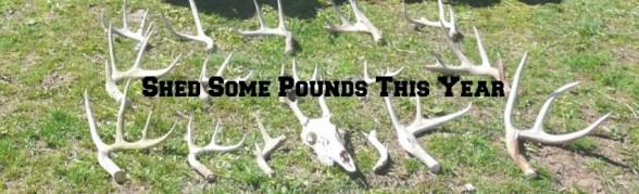 How to find deer sheds