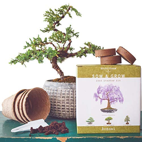 Nature S Blossom Bonsai Tree Kit Grow 4 Types Of Bonsai Trees From Seed Indoor Outdoor Gardening Starter Set With Best Camp Kitchen