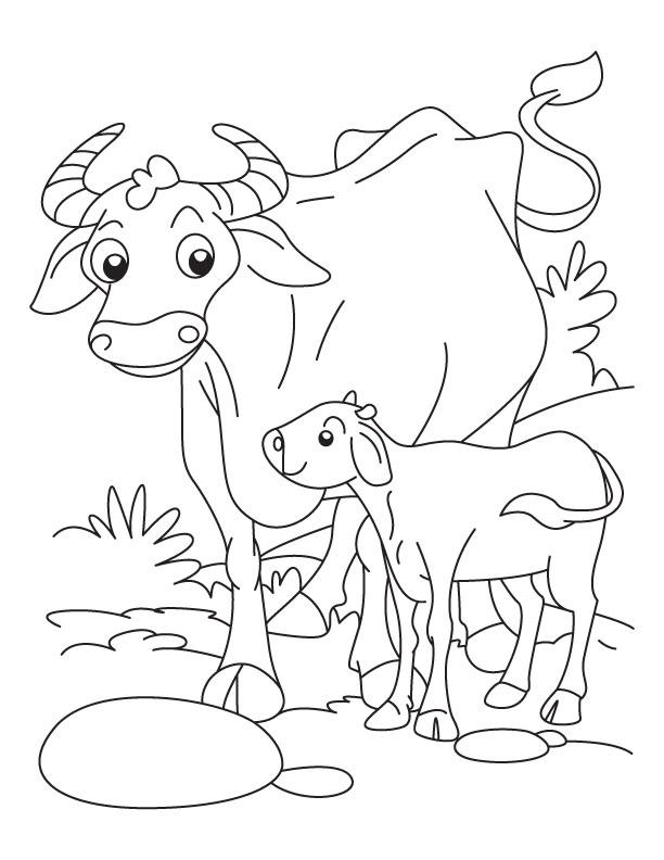 buffalo  a calf coloring pages  download free buffalo