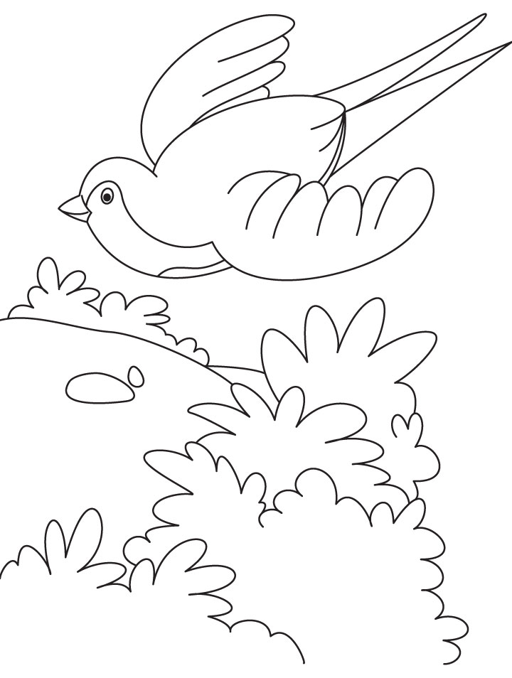 A Flying Swallow Bird Coloring Page Download Free A