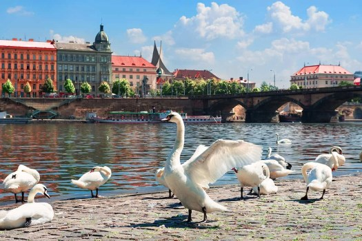 Cosmetic Surgery In Prague All You Need To Know